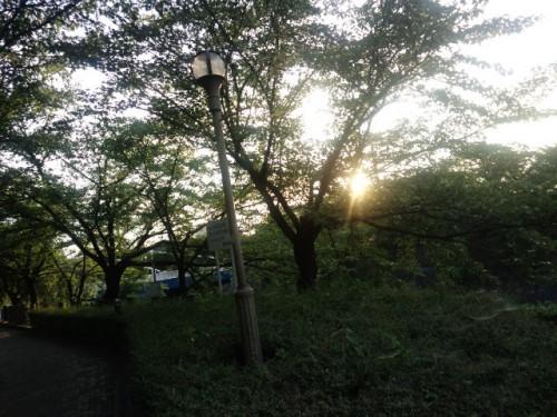 山崎川のほとり、夏の夕暮れ